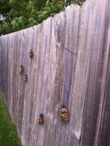 backyard pinecone bird feeders