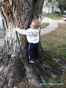 tree climb '11