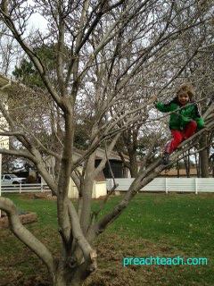 tree climb '14